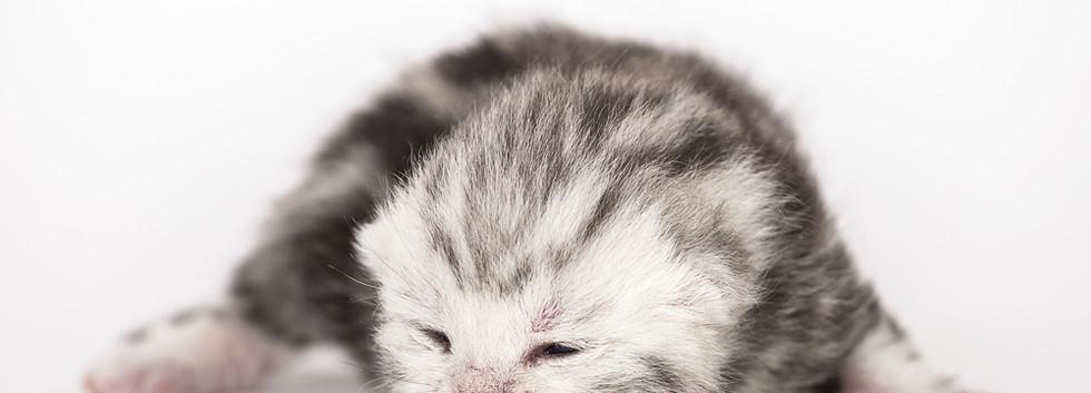 05_1000_Kitten-9979.jpg