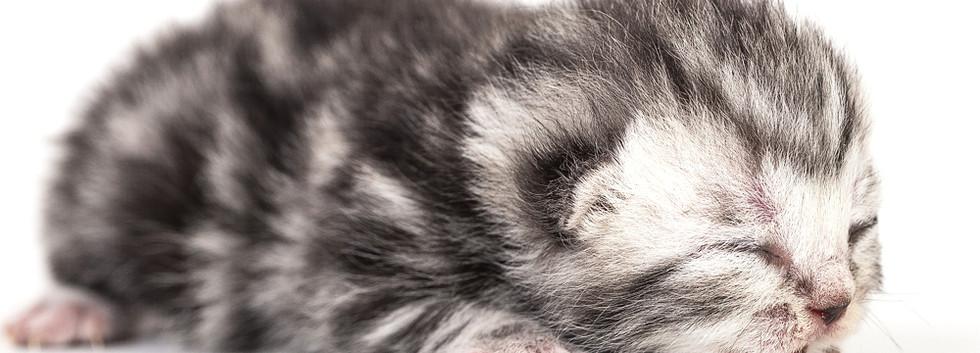 01_1000_Kitten-0023.jpg