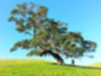 landscape-tree-nature-wilderness-plant-s