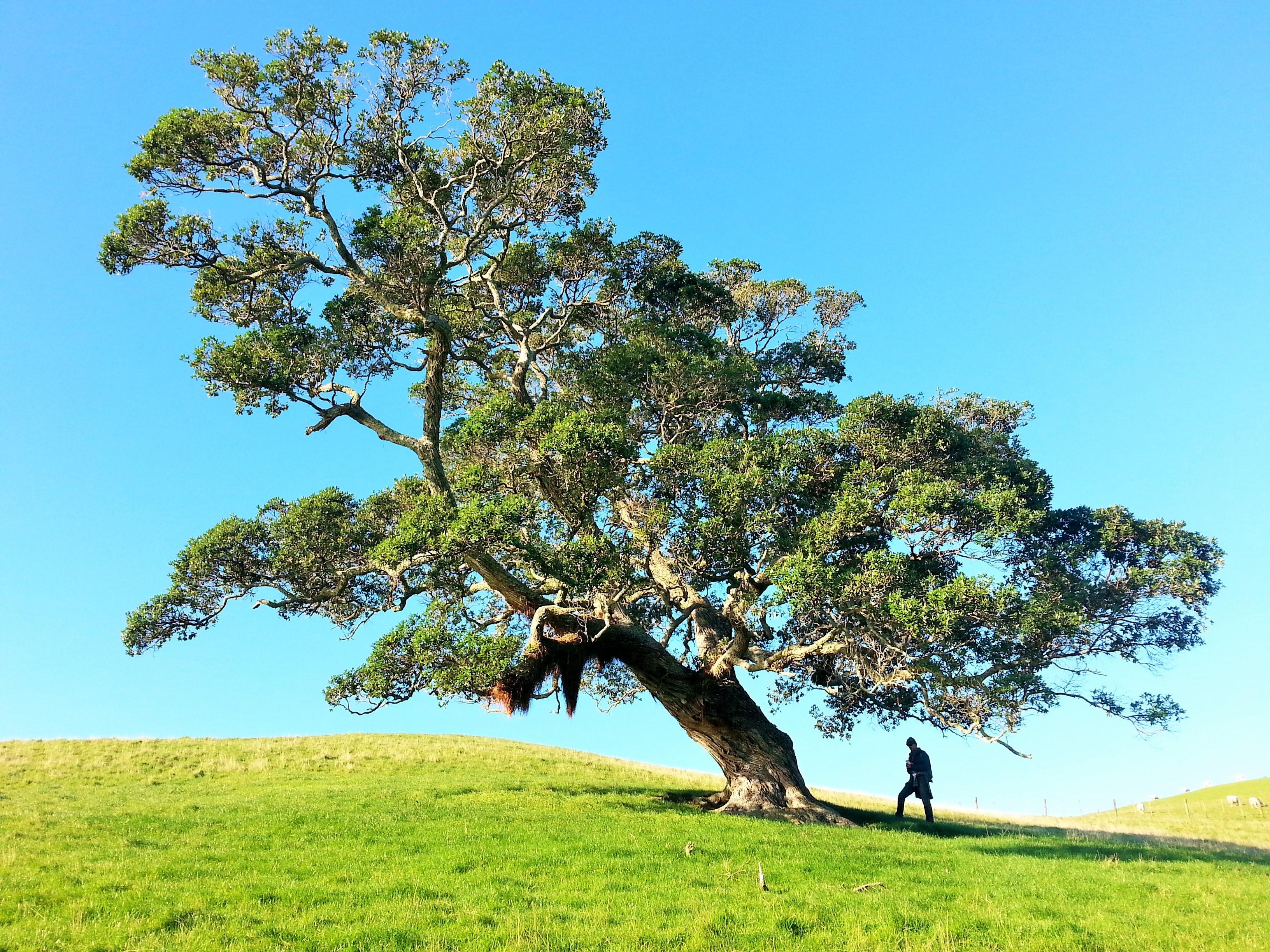 Un arbre pour transformer votre vie