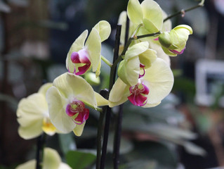 Floral Friday: Orchids
