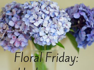Floral Friday: Hydrangeas