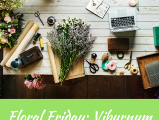 Floral Friday: Viburnum