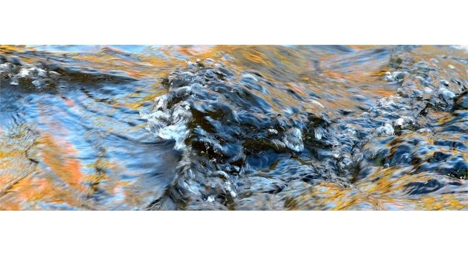 Dog Stream Appalachian series