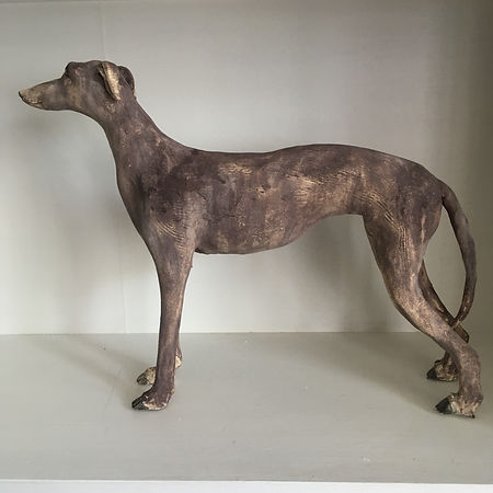Graceful Greyhound.JPG
