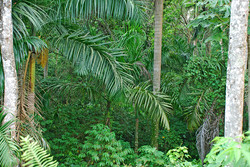 Threatened Tropical Forest