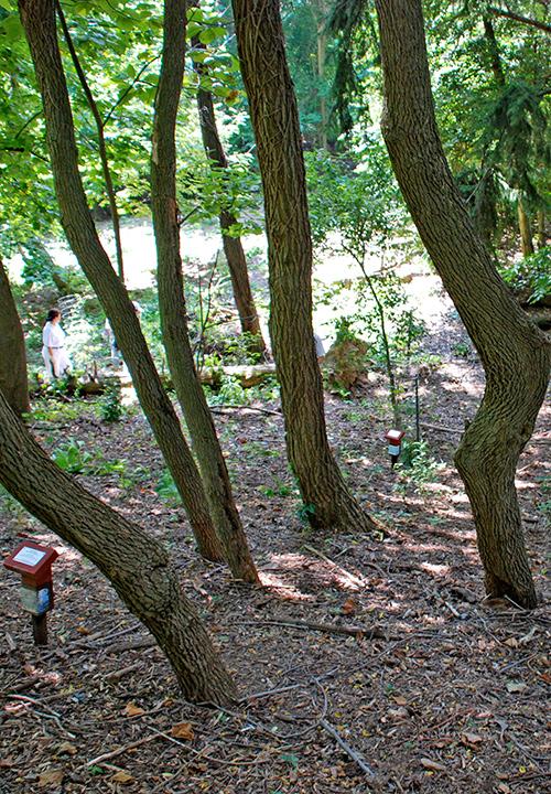 Native Arboretum