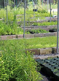 Wild Plant Nursery