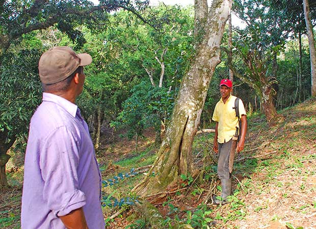 Mapping Conservation for the Tree Bank