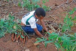 Parcelas Agro-Ecológicas