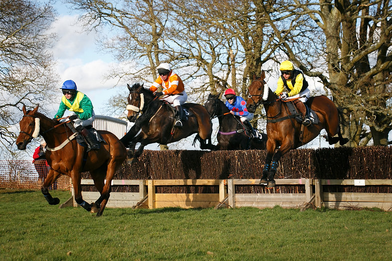 crawley and horsham point to point