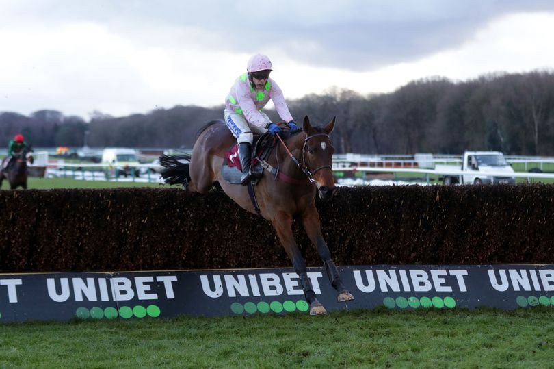 """A resolution on Royale Pagaille's Cheltenham event target has been made with the thrilling novice set to participate in the Well Child Cheltenham Gold Cup this weekend. The seven-year-old, owned by Rich and Susannah Ricci held entries for the National Hunt Chase on Tuesday and Wednesday's Grade 1 Brown Advisory Novices' Chase, but connections have decided to go for jump racing's most esteemed horse race. Venetia Williams disclosed the resolution was made to the Racing Post last weekend and following the decision, Royale Pagaille has been cut to a general 8-1 from 10 for the forthcoming Gold Cup.  Royale Pagaille has been a huge revelation this term, coming tops in all three of his race start this season, most recently with a scintillating weight-carrying display under Tom Scudamore at Haydock in the New Year. Earlier in March, Royale Pagaille was cut by bookies to 2-1 from 9-2 for the National Hunt Chase event –but both Joe Chambers and Williams, racing manager for the Riccis, set aside the notion a decision had been finally made.  However, with the final pronouncement due for the National Hunt Chase event on Sunday morning with odds from BoyleSports coming handy for the punters, Royale Pagaille's target has been decided. Speaking earlier on Sunday, Joe Chambers disclosed: """"He's set for the Gold Cup. We spoke last night and Venetia was happy to go for the Gold Cup and collectively that's what we agreed, assuming everything remains okay with Monkfish. """"Once the horse was okay this morning, we said we'd let people know before declarations for the National Hunt Chase.   """"He's rated 166, whether he merits it or not time will tell, but we might as well find out in the Gold Cup than elsewhere and wonder whether should we had. He's been the surprise of the season and it's something to look forward to."""" Royale Pagaille, who is expected to be ridden at Cheltenham by talented young jockey Charlie Deutsch, will be looking to become the first novice to come out victorious in th"""