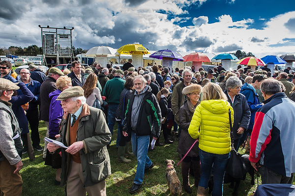 Punters gather at the Point-to-Point