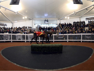 Point-to-Point & Horses in Training sale will give early indication of Corona impact on ownershi