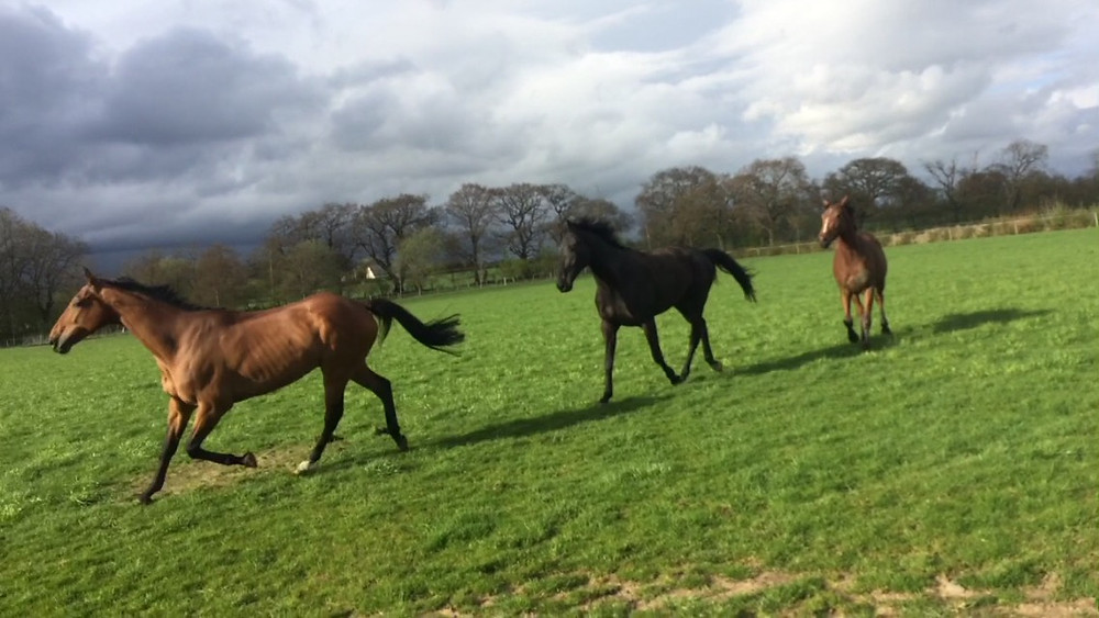Many National Hunt horses are on early holidays