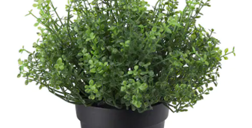 """Artificial potted plant, indoor/outdoor Baby's tears3 ½ """" (9 cm)"""