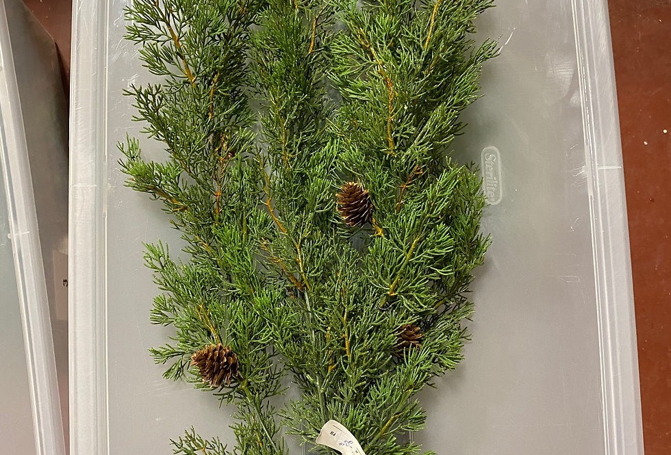 Spray - Cedar w/Pinecones (81272)