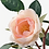 """Thumbnail: Artificial Pink Rose potted plant, indoor/outdoor, 3 ½ """" (9 cm)"""