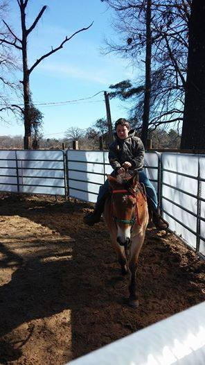 Facebook - This is Tank! He is a 13 yr. old quarter horse grade gelding. He is k