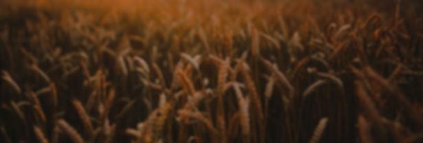 food-sunset-love-field_edited.jpg
