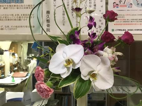 今月のお花です
