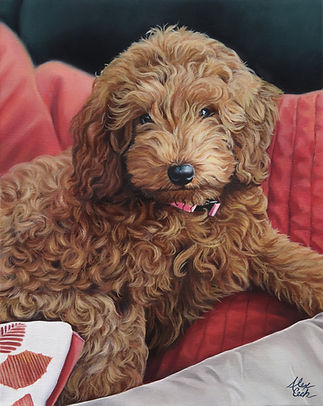 cavadoodle painting