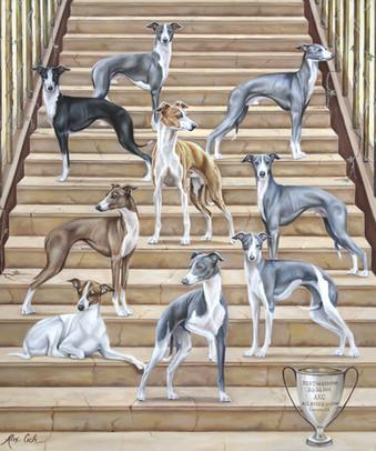 Milko Italian Greyhounds