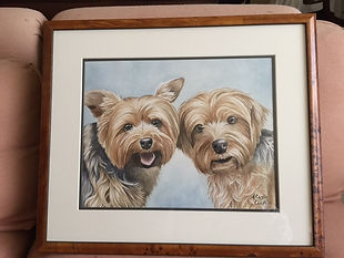Yorkies watercolor