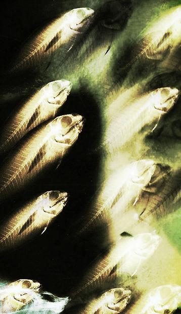 Fishkinfilms-Tim Cutler uk documentary film maker