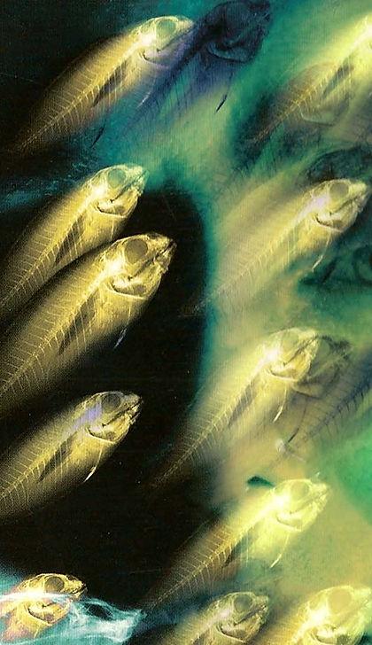 Tim Cutler,Fishkinfilms