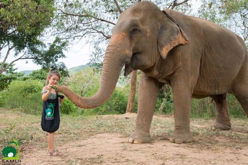 Samui_Elephant_Sanctuary_43.jpg