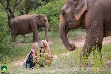 Samui_Elephant_Sanctuary_35.jpg