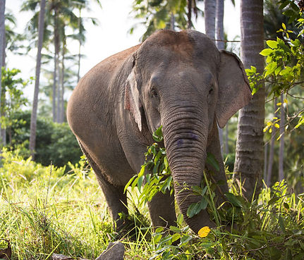 Elephant_Jamie.jpg