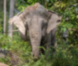 Elephant_Kham_Noi.jpg