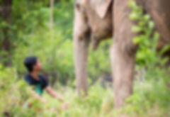 Founder Samui Elephant Sanctuary