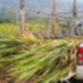 Pickup_Truck_Grass2.jpg
