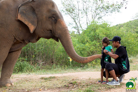 Samui_Elephant_Sanctuary_33.jpg