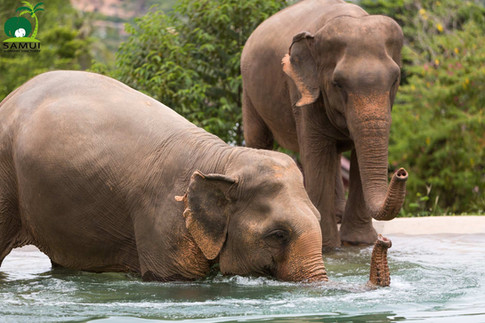 Samui_Elephant_Sanctuary_51.jpg