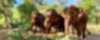 SES_Shop_Elephant_Food.jpg