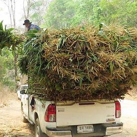 Pickup_Truck_Cornstalks_3.jpg
