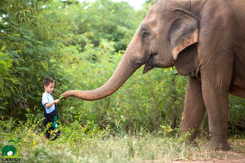 Samui_Elephant_Sanctuary_32.jpg