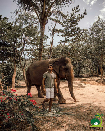 Samui_Elephant_Sanctuary_61.jpg