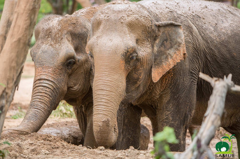 Samui_Elephant_Sanctuary_49.jpg