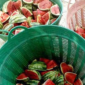 Watermelons4.jpg