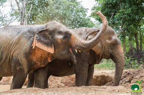 Samui_Elephant_Sanctuary_46.jpg