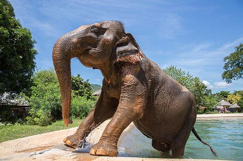 Samui Elephant Sanctuary-61.jpg