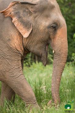 Samui_Elephant_Sanctuary_41.jpg