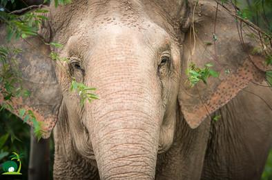 thai elephant sanctuary