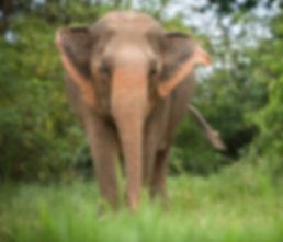 Elephant_KhamSan_1.jpg