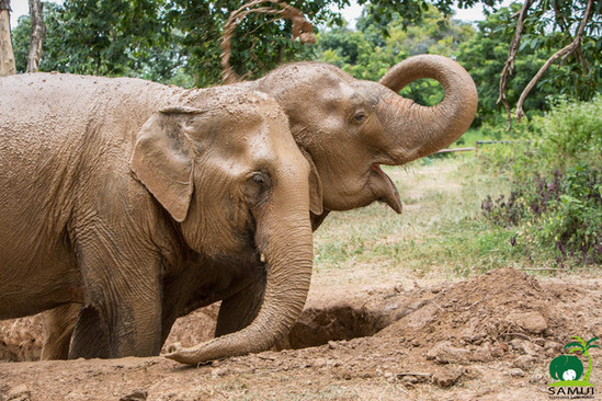 Samui_Elephant_Sanctuary_50.jpg